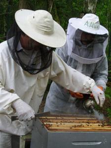 rucher ecole les amis des abeilles du val d 39 oise. Black Bedroom Furniture Sets. Home Design Ideas
