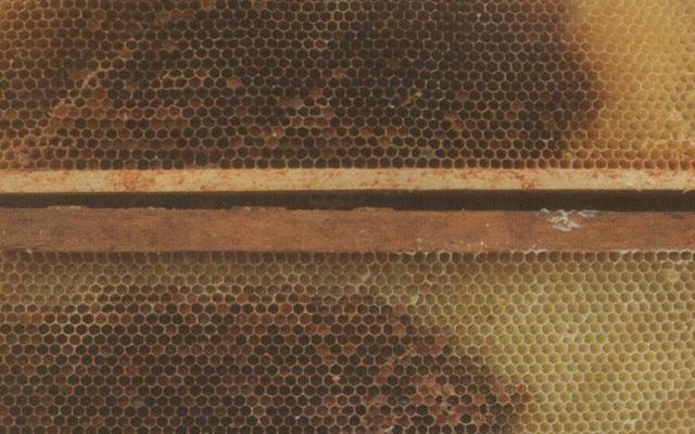 Cadres ayant contenu du couvain et du pollen